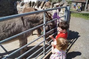 Grimsbury goat meet