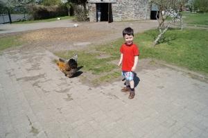 Grimsbury hens