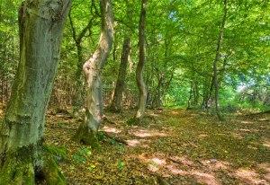 stonebury_learning_woodland_treasure