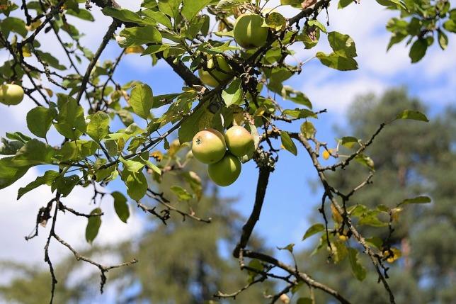 apple-1640133_960_720