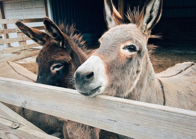 donkey-1725232_960_720