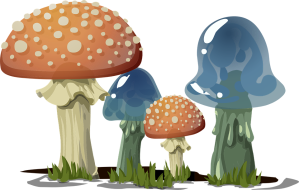 mushrooms-576065_960_720
