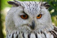 owl-62703_960_720